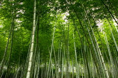Bamboo sea Royalty Free Stock Photography