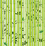 Bamboo seamless asian forest vector illustration