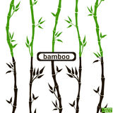 Bamboo seamless pattern black, green Stock Images