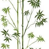 Bamboo Seamless Pattern Stock Photography