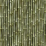 Bamboo Seamless Texture Stock Images