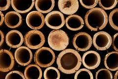 Bamboo section Stock Photos