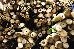 Bamboo section view Stock Photos