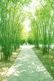 Bamboo shade footpath Stock Photography
