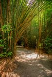 Bamboo Footpath Sunny Day stock photography