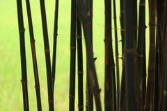 Bamboo in shadow green light background stock photography
