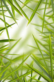 Bamboo Shhot Backround Stock Photography