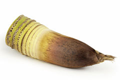Bamboo shoot Stock Images