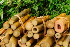 Bamboo shoot Royalty Free Stock Photo