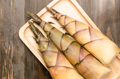 Bamboo shoot Royalty Free Stock Photography