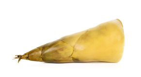 Bamboo shoot isolated on the white background Royalty Free Stock Photos