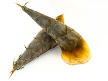 Bamboo shoot in Thailand. Raw bamboo shoot prepare for soup Royalty Free Stock Image