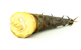 Bamboo shoot in Thailand. Raw bamboo shoot prepare for soup Royalty Free Stock Photos