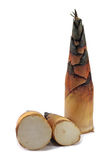 Bamboo shoot. Tree bamboo shoot on white background Stock Photos
