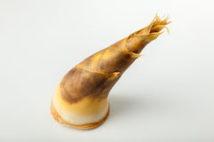 Bamboo shoot. On white background Royalty Free Stock Images