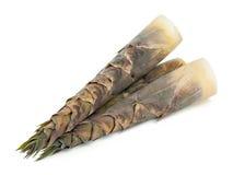 Bamboo shoot. On white background Stock Image