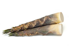 Bamboo shoot. On white background Royalty Free Stock Photos