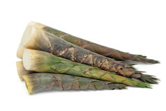 Bamboo shoot. On white background Stock Images