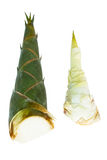 Bamboo shoot Royalty Free Stock Photography