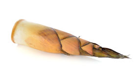 Bamboo shoot Stock Photo