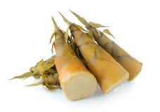 Bamboo shoot Royalty Free Stock Photo