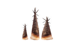 Bamboo shoot on white background, with clipping path. Royalty Free Stock Photo