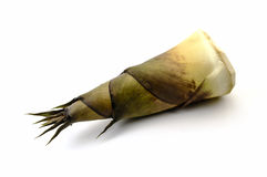 Bamboo shoot on the white background Royalty Free Stock Image
