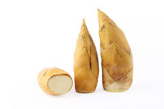 Bamboo shoots Royalty Free Stock Photo