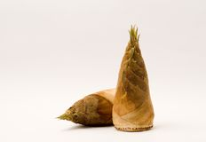 Bamboo shoots. Is a traditional chinese health food Stock Image