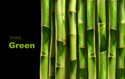Bamboo shoots on black Royalty Free Stock Photography