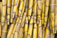 Bamboo shoots. Boiled bamboo shoots prepared to sell,Mae Sot, Thailand Royalty Free Stock Images