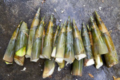 Bamboo shoots on Concrete Stock Photography