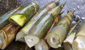 Bamboo shoots on Concrete Stock Photo