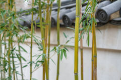 Bamboo shoots. In front of an old chinese wall Stock Photos