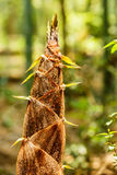 Bamboo shoots of the growth in the forest Stock Image
