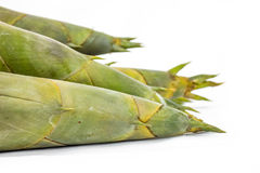 Bamboo shoots Royalty Free Stock Image