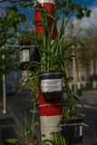 Bamboo shoots on a pole as a part of optimizing the space in a c. Ity at Brussels, Belgium, Europe Stock Images