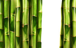 Bamboo shoots stacked side by side Stock Images