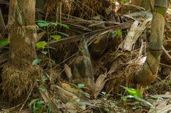 Bamboo shoots. Stock Image