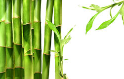 Bamboo shoots on white Royalty Free Stock Photos