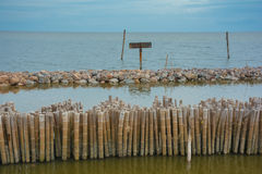 Bamboo shore erosion along the waves of the sea. Stock Image