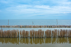 Bamboo shore erosion along the waves of the sea. Stock Images