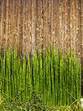 Bamboo shots on wood Royalty Free Stock Images