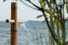 Bamboo shower Stock Photography