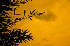 Bamboo silhouette Royalty Free Stock Image