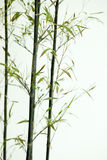 Bamboo silhouette Stock Photography