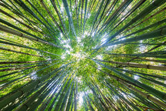 Bamboo sky Stock Images