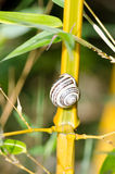 Bamboo and snail stock images