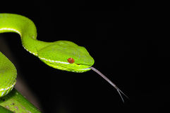 Bamboo Snake. Shoot in the night Stock Photography