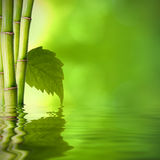 Bamboo spa concept Stock Photo